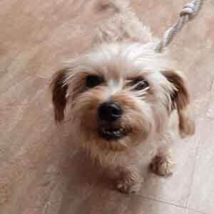 Dog adoption #A-1687 WAGS