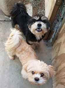 Mia and Molly still looking furever home WAGS