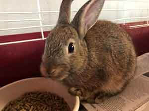 Nubbit and Frazier Rabbit adoption WAGS