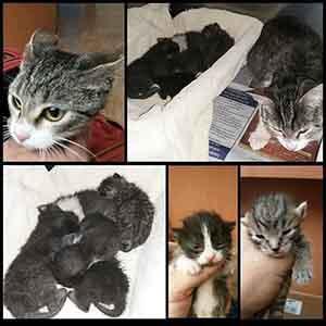 Foster needed Kitten Adoption WAGS