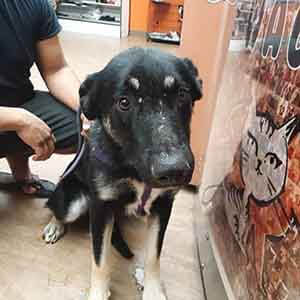 Nervous male dog adoption #A-1845 WAGS