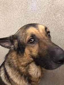 Two Male Dog #A-1814 and #A-1815 adoption WAGS