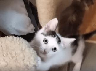 Kitten Party starts noon WAGS