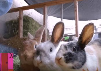 Rabbit adoption WAGS