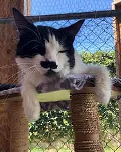 "Shout wants to say, ""Happy Mustache Monday!"" Cats adoption WAGS"