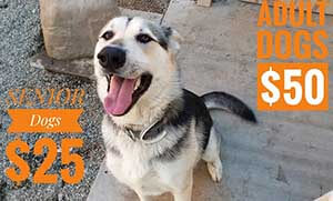 Dog gone Senoir dogs adoption specials WAGS