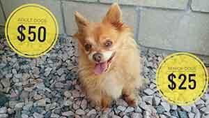 Fluffy Summer time Special dog adoption WAGS