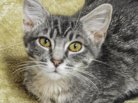 Kitten! More kittens! are $25 pet adoption WAGS
