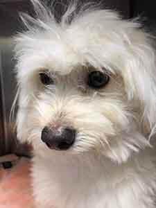 Dog found adoption WAGS