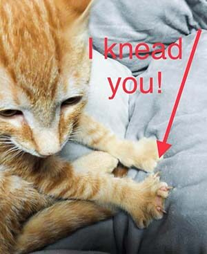 """I """"knead"""" you to adopt me! $25 adopt fee for all kittens! WAGS"""