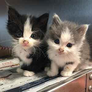we have two ~4 week old kittens looking for a foster home WAGS