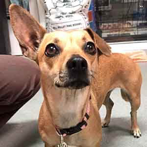 Female Dog found #A-1932 pet adoption WAGS