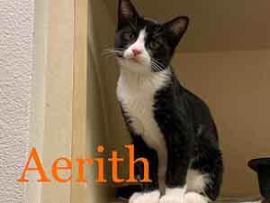 Tuxedo kitten Aerith adoption WAGS