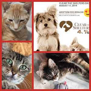 ClearTheShelters on this Saturday WAGS