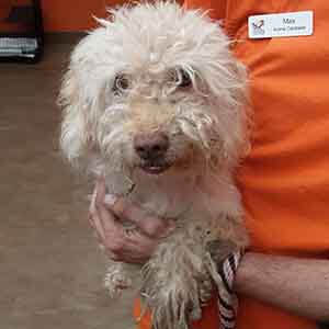 Sweet Male dog found #A-1910 adoption WAGS