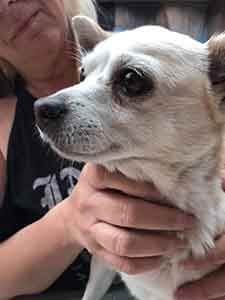 Dog found #A-1998 pet adoption WAGS