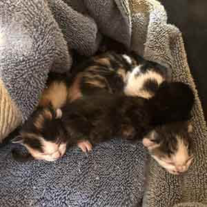 We have 5 ~2-3 day old kittens that need a foster home ASAP WAGS