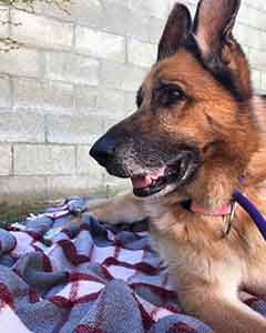 Grannie is STILL looking for a Forever Foster home WAGS