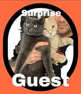 SoCal Honda Dealers kitten Adoption WAGS
