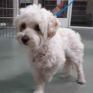Female dog found #A-2040 pet adoption WAGS