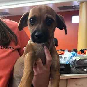 dog found #A-2054 pet adoption WAGS