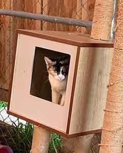 Peek-a-boo! Cat adoption WAGS