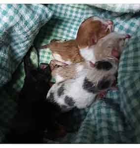 URGENT we have several kittens that needs foster home ASAP WAGS