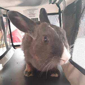 Bunny found #A-2156 pet adoption WAGS