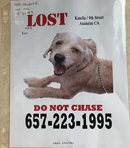 Rex is lost WAGS