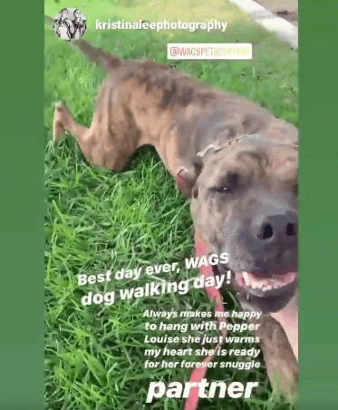 Pepper Louise dog adoption WAGS