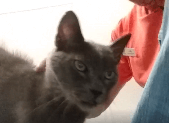 Smokey wanted to remind you Clear the Shelters on 8-17-19 WAGS