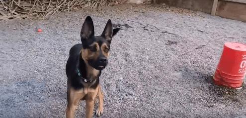 Razzelberry pet adoption WAGS
