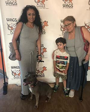 6 pets were find their forever home WAGS