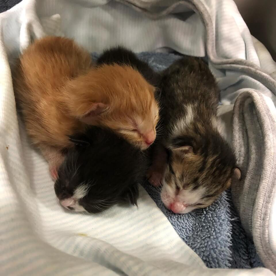 3 bottle babies needs a foster home WAGS