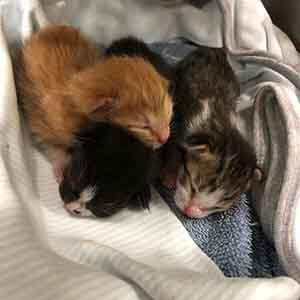 Help 3 bottle babies needs to be foster WAGS