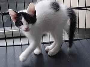We have 180 kittens in foster care ready to come back and get adopted. WAGS