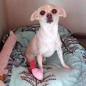 Bubbles is looking for furever home pet adoption WAGS