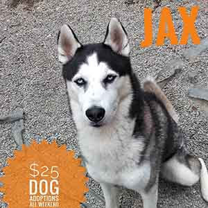 Jax says All previously spayed/neutered ADULT dogs are only $25 to adopt! WAGS