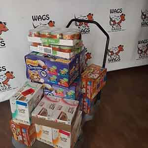 Thank you Ernst and Young in Irvine for donating can cat WAGS