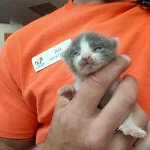 Urgent, we have a single bottle baby in need of a foster. WAGS