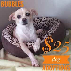 Lil Bubbles says All previously spayed/neutered ADULT dogs are only $25 to adopt! WAGS