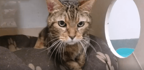 Free roaming cat room Sid adoption WAGS
