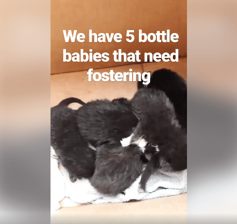 We have 5 bottle babies in desperate need of a foster WAGS