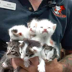 We have 3 litters of kitten that needs foster home WAGS