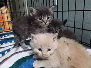 These bottle kittes have found foster homes Thank you WAGS