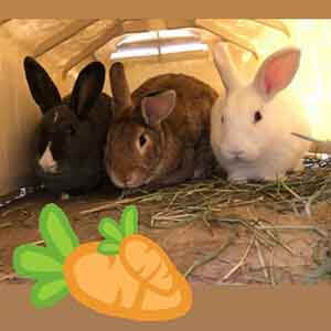 These cute Bunny Bonnie, Parsnip and Crumb enjoying a shady spot WAGS