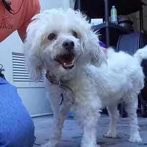 Frito! He is 7-9yrs old dog friendly WAGS