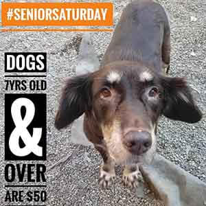 Meet Darla and our other Super Seniors, 7yrs or over are $50 to adopt WAGS
