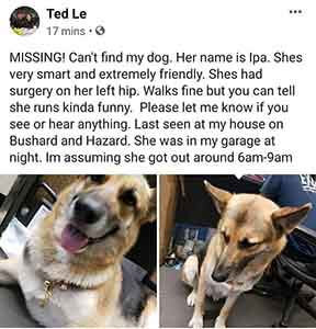 Missing my dog Ipa, Last seen at Bushard and Hazard WAGS