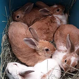 Another 5 rabbits were caught in Westminster Park WAGS